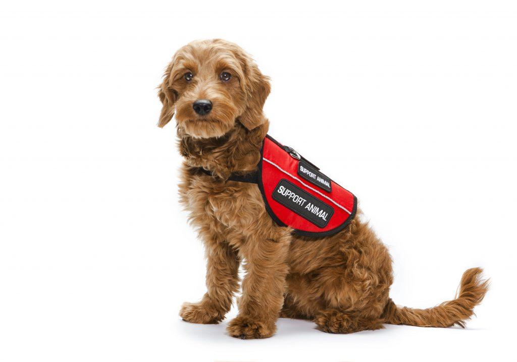 emotional support dog